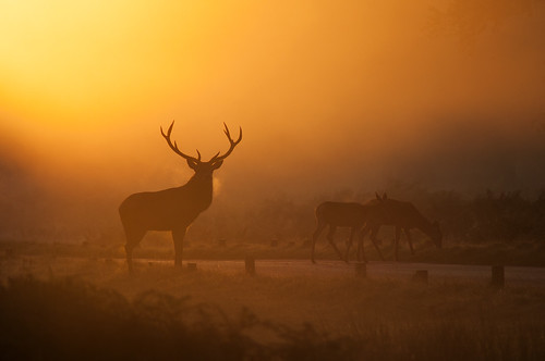 sunset mist nature fog sunrise landscape nikon stag