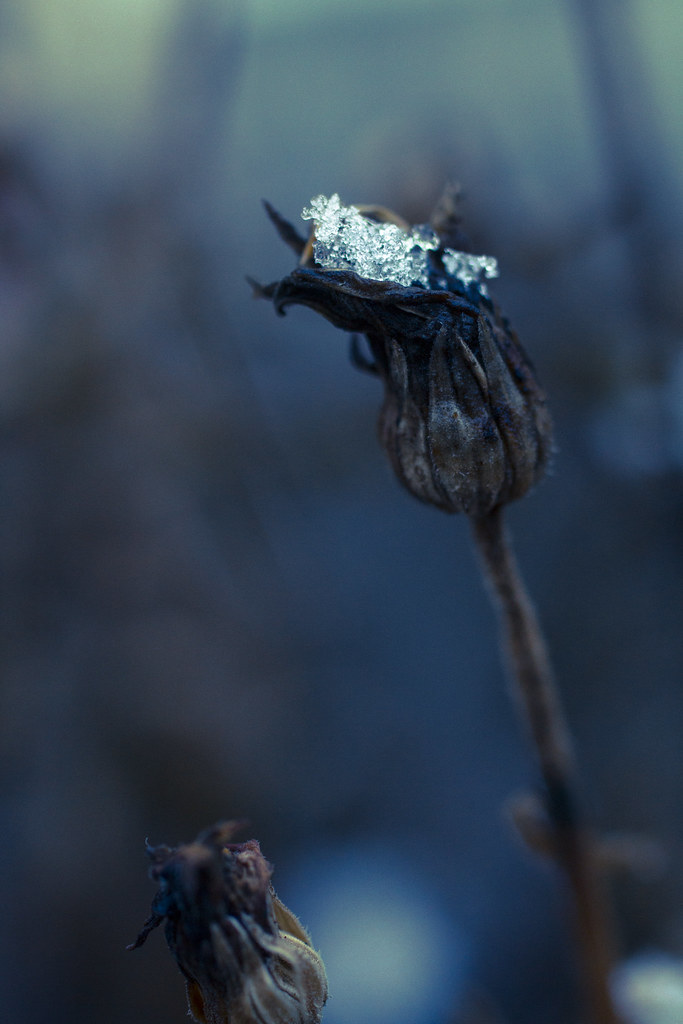 23.01.2015 Jack Frost's Calling Card