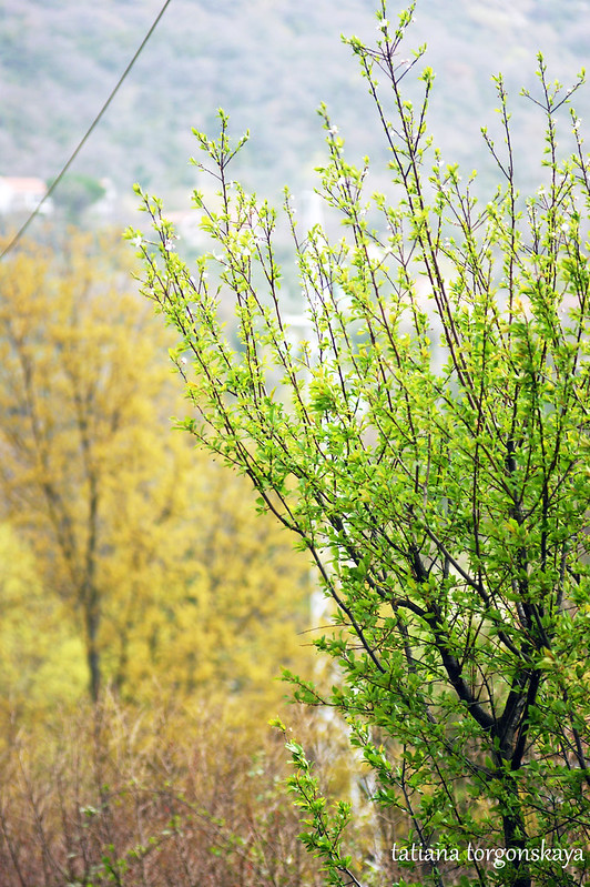 Весенние деревья