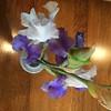#iris - from Jim's #garden