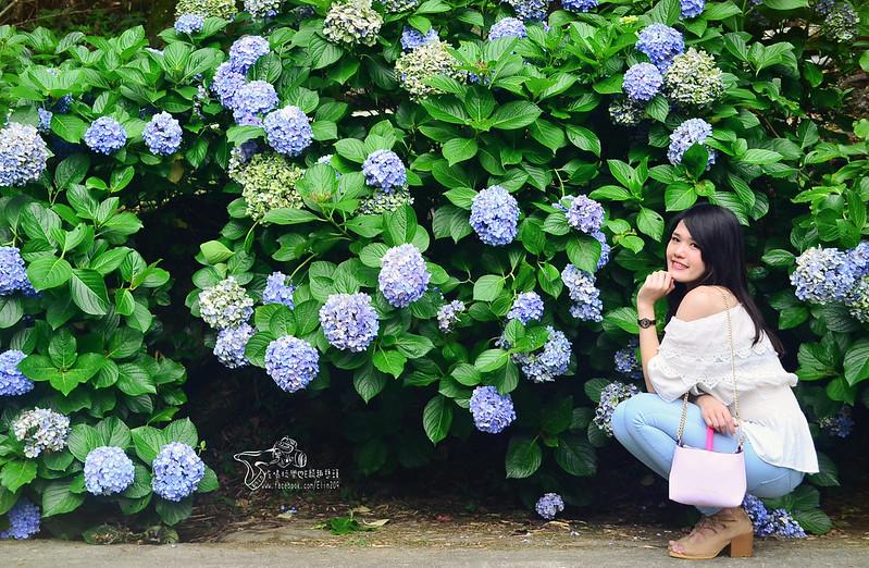 繡球花 (21)