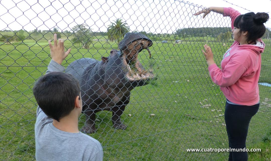 Un hipopótamo comiendo al lado de la valla