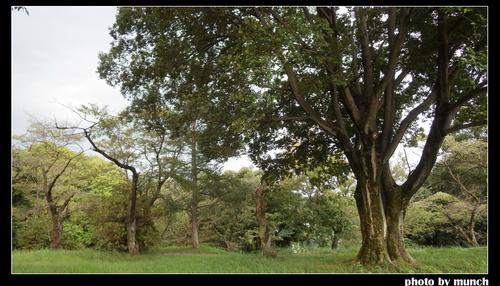 龍貓森林。圖片來源:munch
