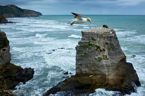 ocean newzealand seascape beach nature birds contrast sand rocks afternoon shapes textures auckland gannets muriwai cliffface waitakereregionalpark aperture3 fujix100s x100s fujifilmx100s