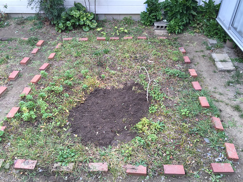 庭の花壇。