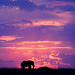 Sunset over the Masai Mara by Christopher.Michel