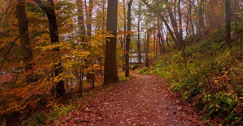 autumn fall nature colors landscape pennsylvania path fallenleaves fallinpa valleyforge valleyforgenationalhistoricalpark nikond3100