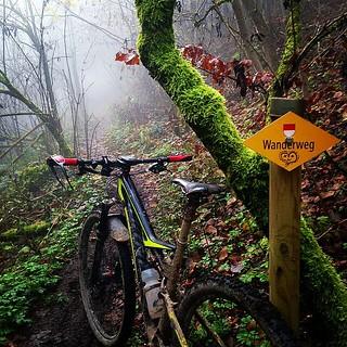 wanderweg 💛 #zegligerberg #bergmatten #winterpokal #specialized #iamspecialized #camber_expert_evo #mtb #nebelsuppe #sonnepur #vtt #mountainbiking #trailsuche