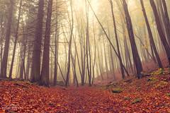 Mystical trail