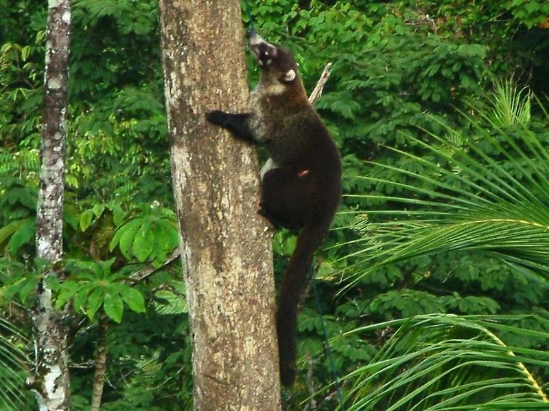 Costa Rica 2006 - 482a