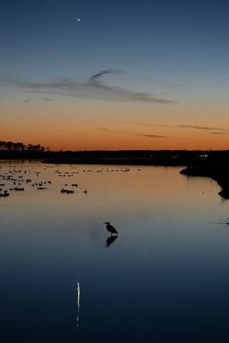cambridge sunset sky venus unitedstates mercury maryland astro easternshore greatblueheron blackwaternwr