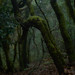 La Gomera_the rainforest_01 by perceptions (creative break)