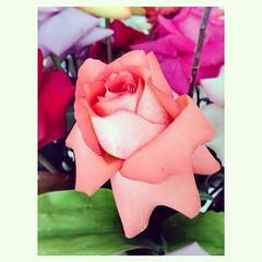 Quinta flor