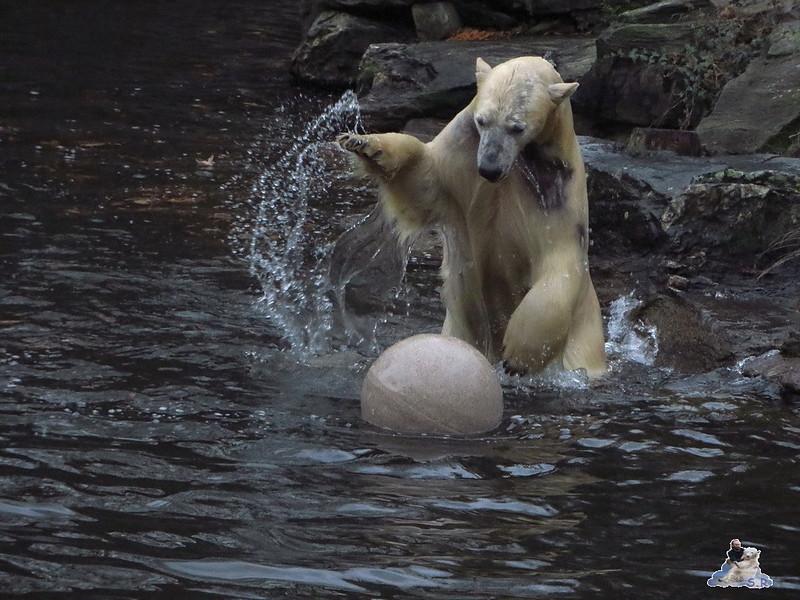 X Tierpark Berlin Eisbären 20.12.2014 31