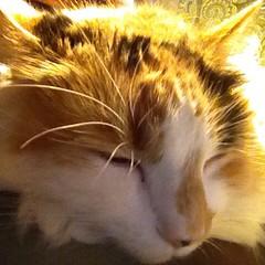 Kitty cat selfie.