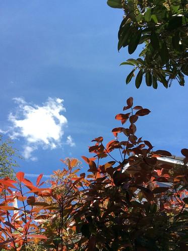 Fotinia et ciel bleu