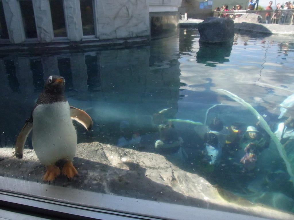 ペンギンガイド