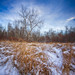 Winter at Elk Island 7