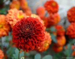 Autumn flowers ✻❀✻