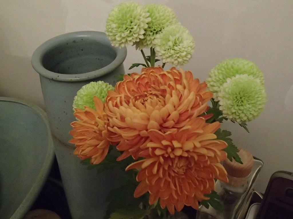 Chrysanthemum 'Orange Allouise' with  Chrysanthemum 'Anastasia Green'
