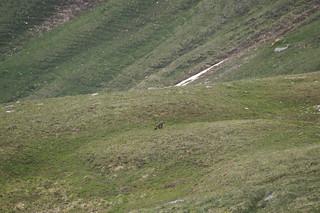 146 Marmot