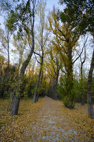 Ruta desde monasterio de El Paular a la Cascada del Purgatorio. Rascafría. Entrada al Bosque de Finlandia.