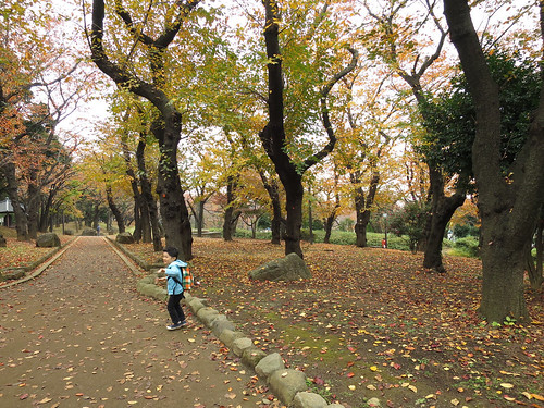 飛鳥山公園 - 紅葉