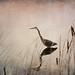 Blue Heron by vicki 1718