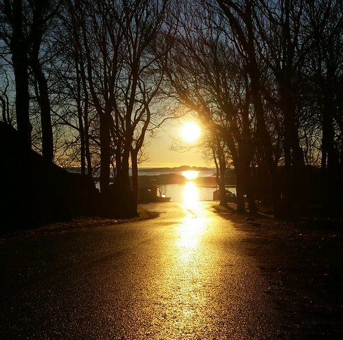 road trees sea sky black reflection nature water silhouette yellow norway sunrise landscape gold golden path branches tjøme verdensende