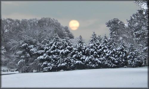 christmas winter holiday snow nature landscape photo whitechristmas gailpiland