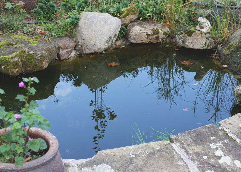 pond at ox pasture hall hotel