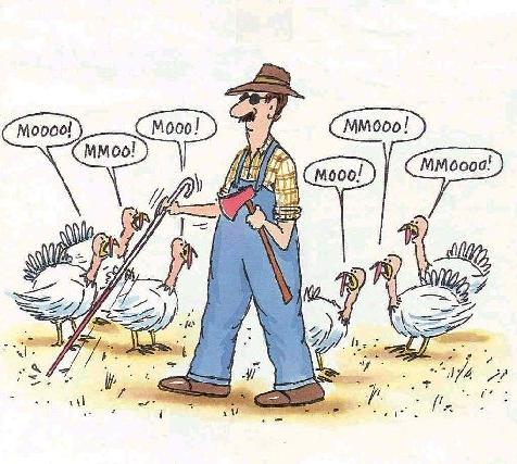 Turkeys Mooing