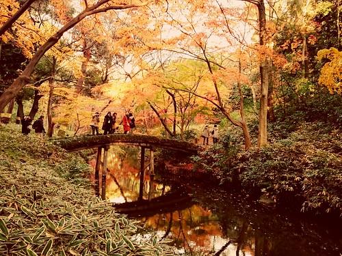 東京 六義園 山陰橋