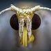 Plume Moth by Ben Mijts