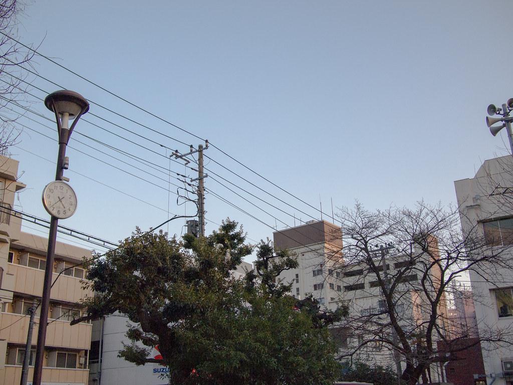 世田谷 丸山公園 (Maruyama Park, Setagaya) 9