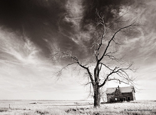 old trees bw house abandoned monochrome grass countryside decay manitoba lonely prairie solitary abandonment decayed decaying cartwright ruralexploration rurex
