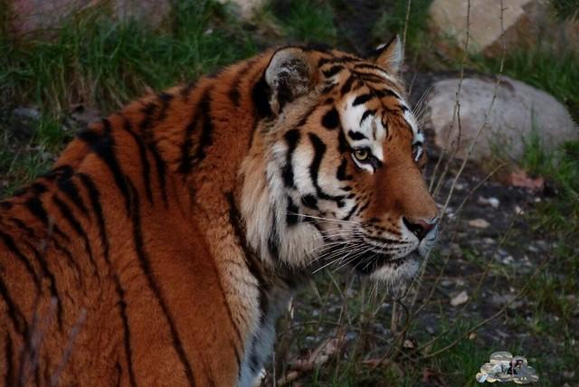 Tierpark Hagenbeck 17.132 _wm