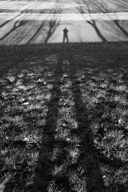 long shadow | temple newsam
