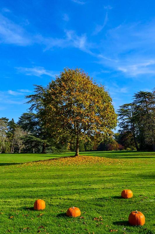 Château de Chaumont Autumn Tree
