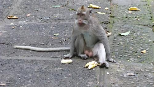 Bali-1-088