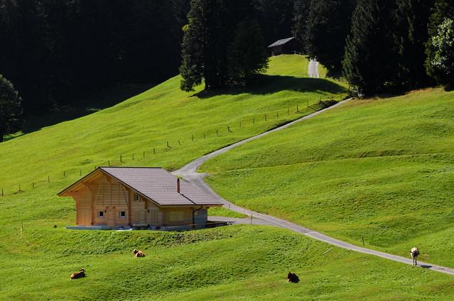Praderas verdes de Suiza con casitas de madera