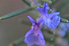 A Handful of Purple