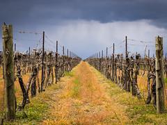 Dramatic Vines