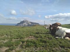 IMG_20160801_174315 - Photo of La Buisse