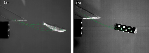 Sensor Fish Shear Motion