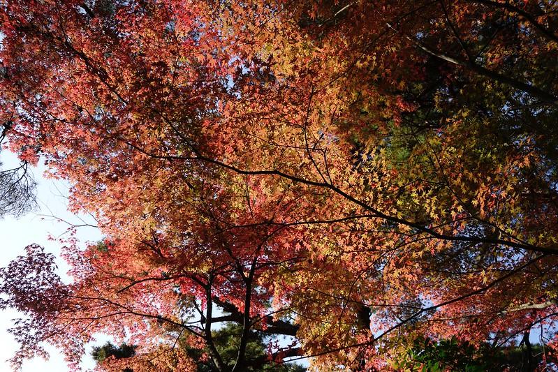 卯辰山の紅葉