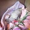 RIP Petunia