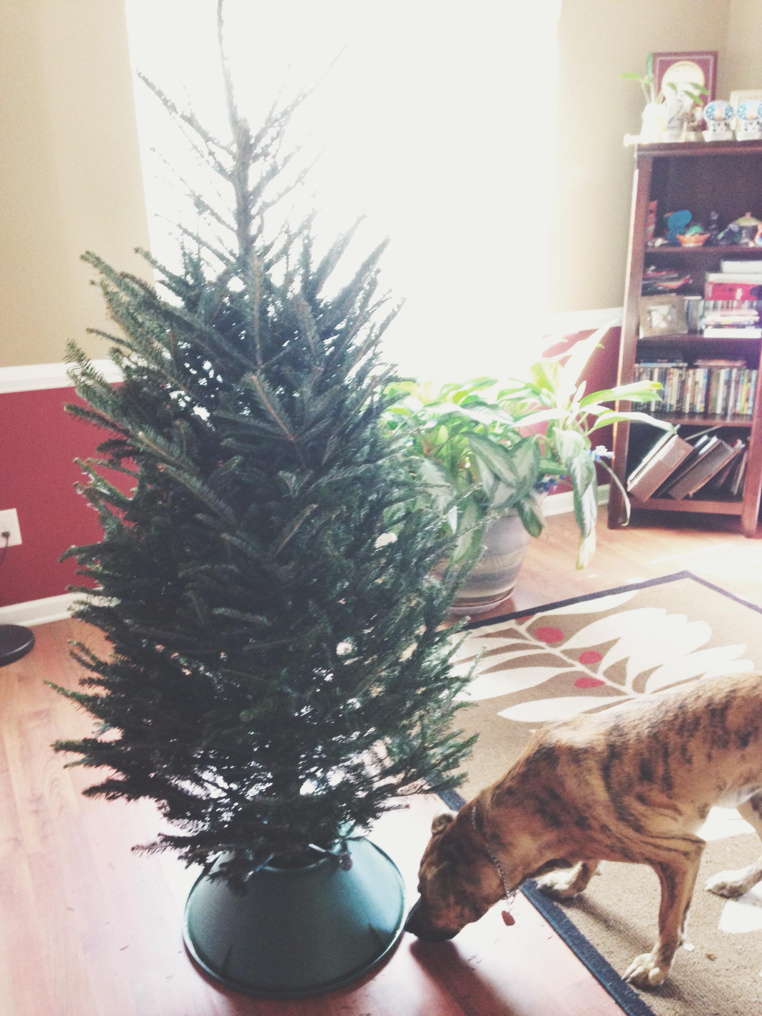 Titus Christmas tree