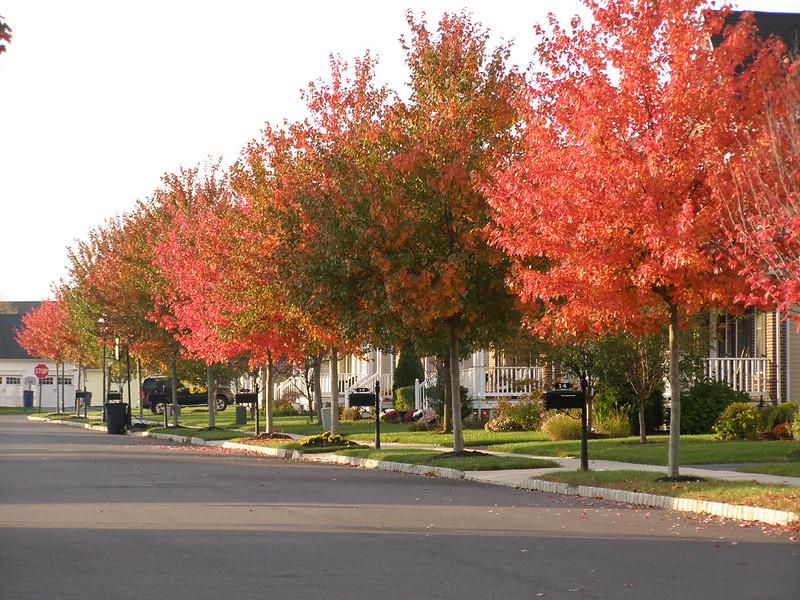 ~ autumn leaves...
