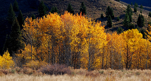 autumn trees fall nature outdoors landscapes scenery fallcolors idaho aspens sunvalley southcentralidaho woodrivervalley